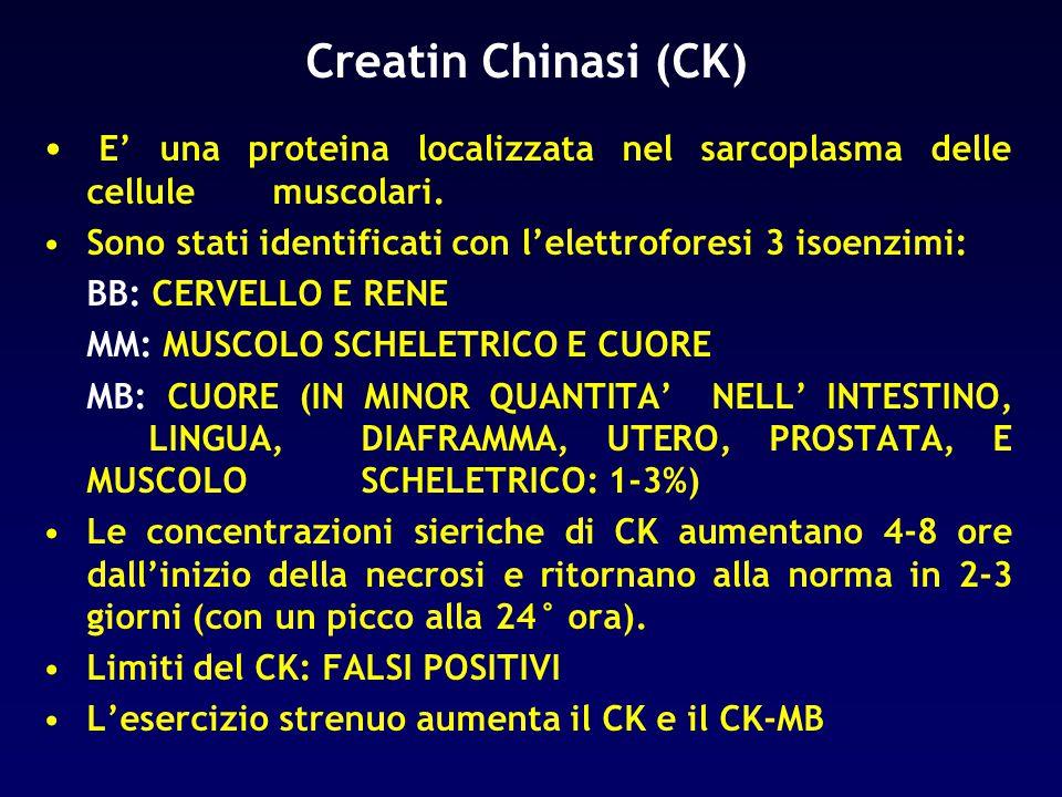 Creatin Chinasi (CK) E' una proteina localizzata nel sarcoplasma delle cellule muscolari.