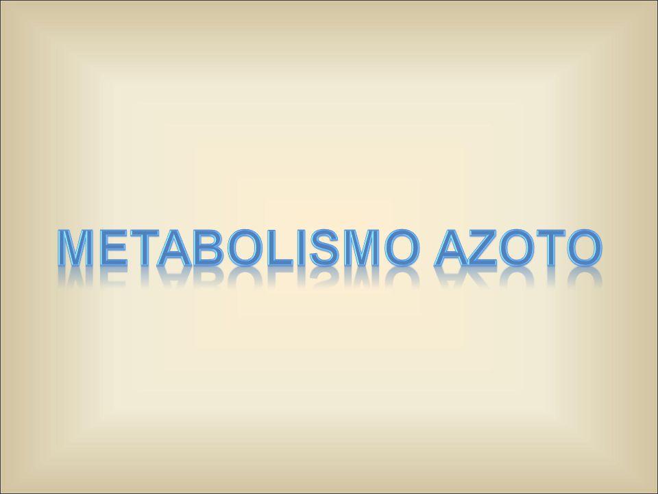 Metabolismo Azoto