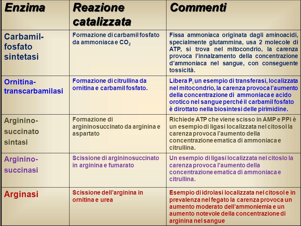 Enzima Reazione catalizzata Commenti Carbamil- fosfato sintetasi