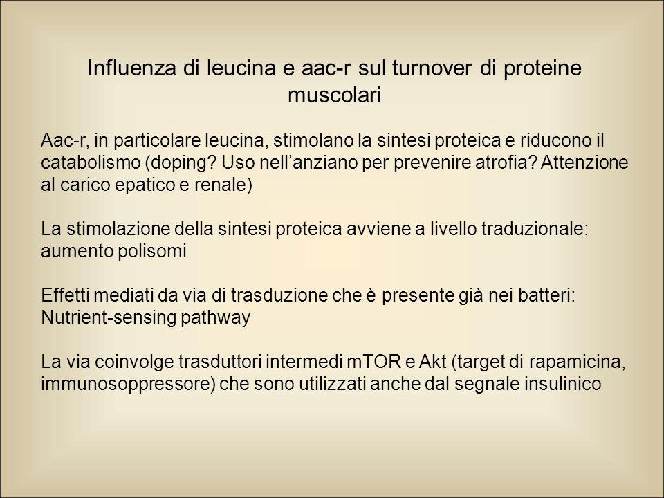 Influenza di leucina e aac-r sul turnover di proteine muscolari