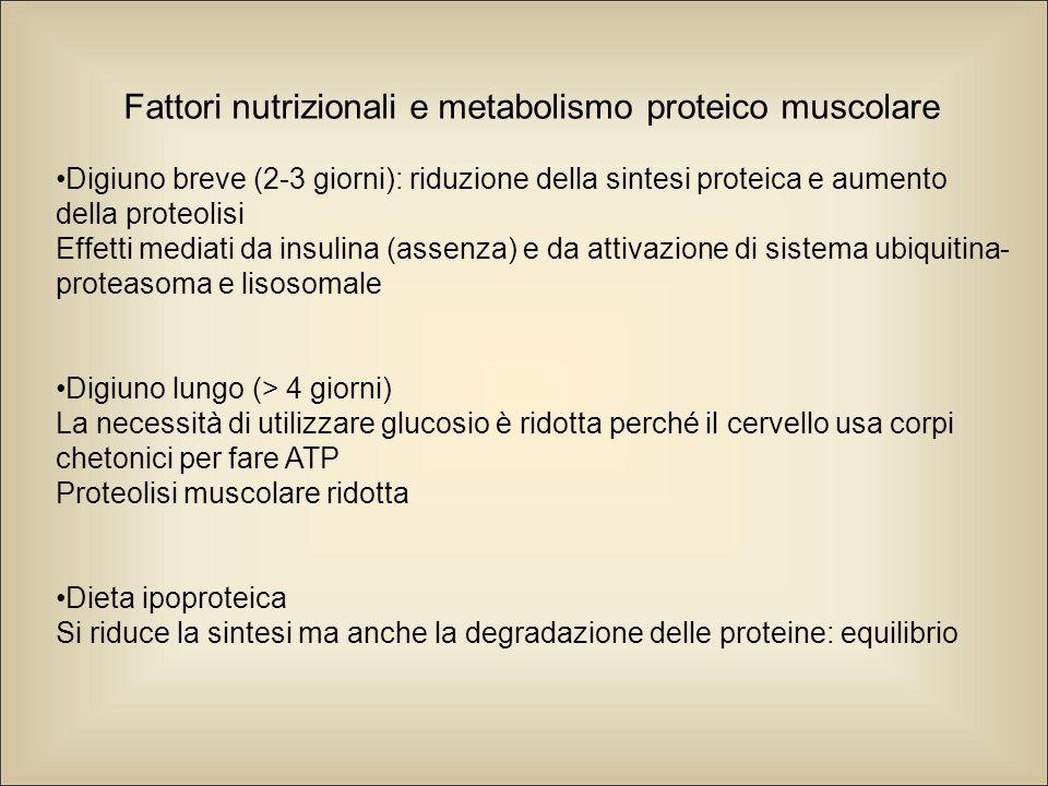 Fattori nutrizionali e metabolismo proteico muscolare