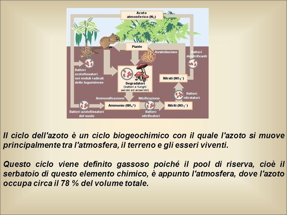 Il ciclo dell azoto è un ciclo biogeochimico con il quale l azoto si muove principalmente tra l atmosfera, il terreno e gli esseri viventi.