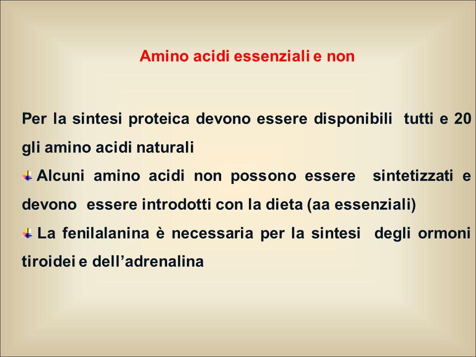 Amino acidi essenziali e non