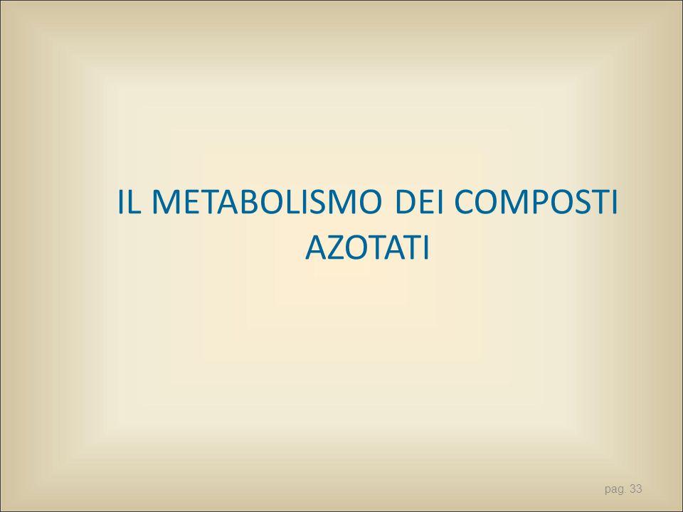 IL METABOLISMO DEI COMPOSTI AZOTATI