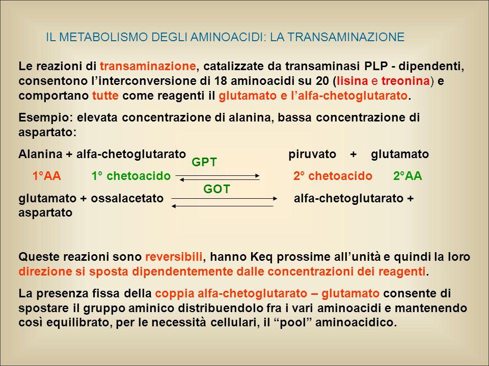 IL METABOLISMO DEGLI AMINOACIDI: LA TRANSAMINAZIONE