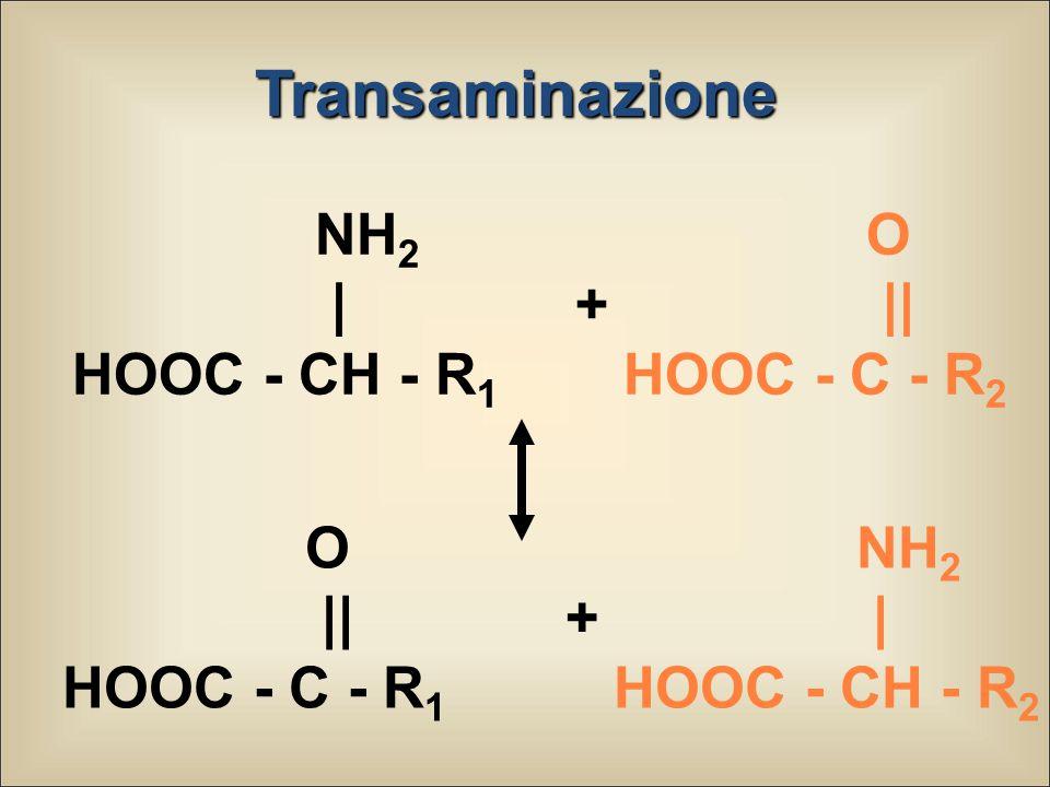 Transaminazione NH2 | + HOOC - CH - R1 O || HOOC - C - R2 O || +