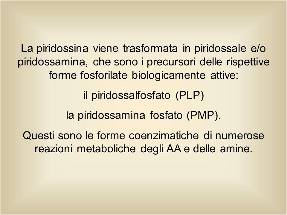 il piridossalfosfato (PLP) la piridossamina fosfato (PMP).