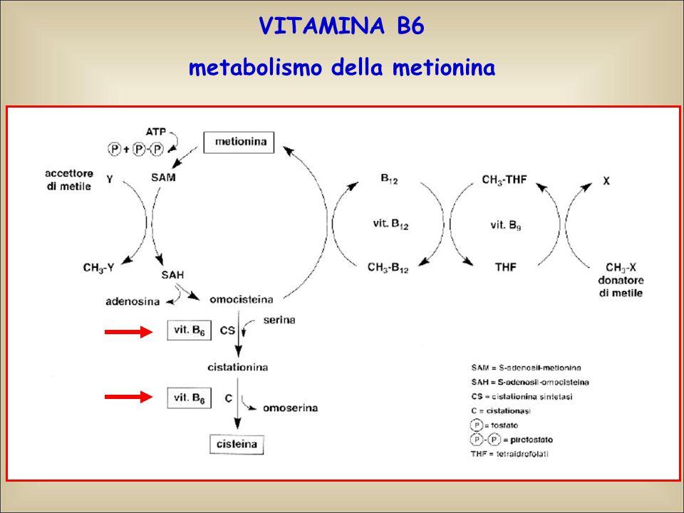 metabolismo della metionina
