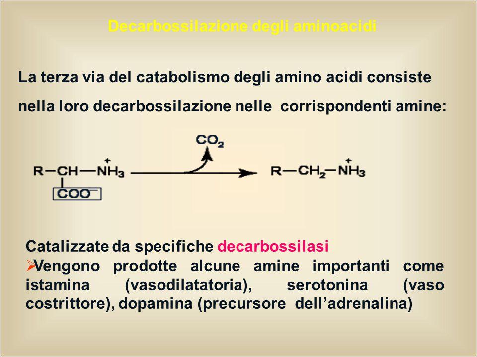 Decarbossilazione degli aminoacidi