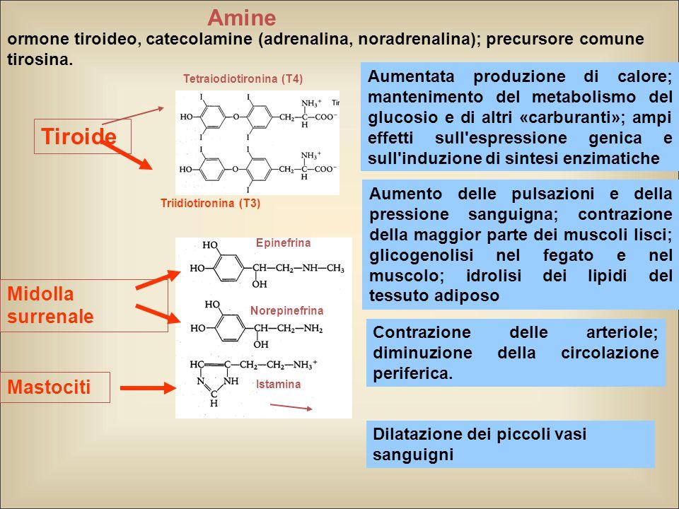 Amine Tiroide Midolla surrenale Mastociti