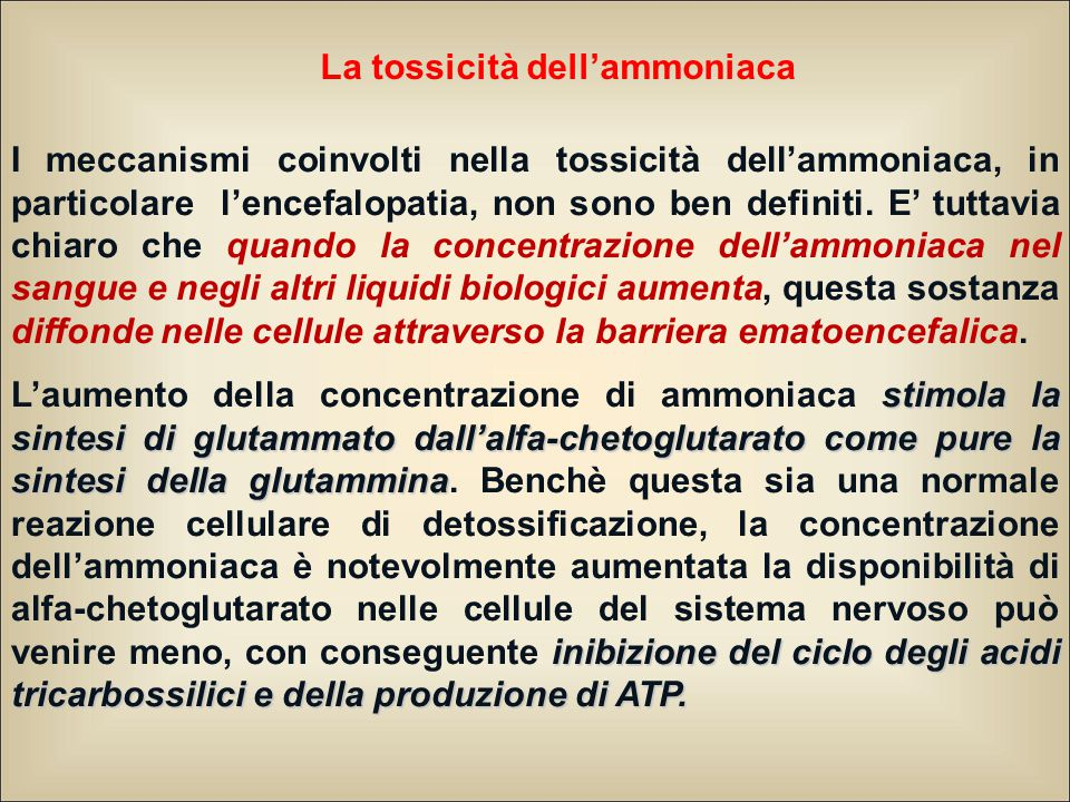 La tossicità dell'ammoniaca