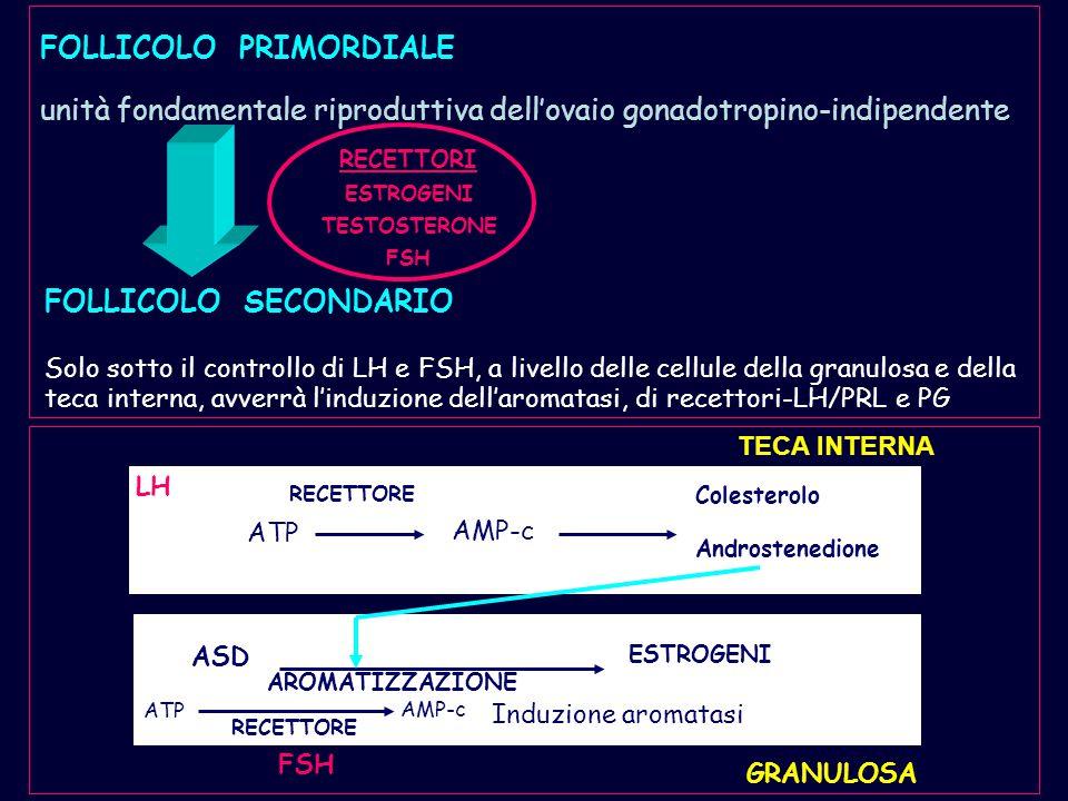 FOLLICOLO PRIMORDIALE unità fondamentale riproduttiva dell'ovaio gonadotropino-indipendente