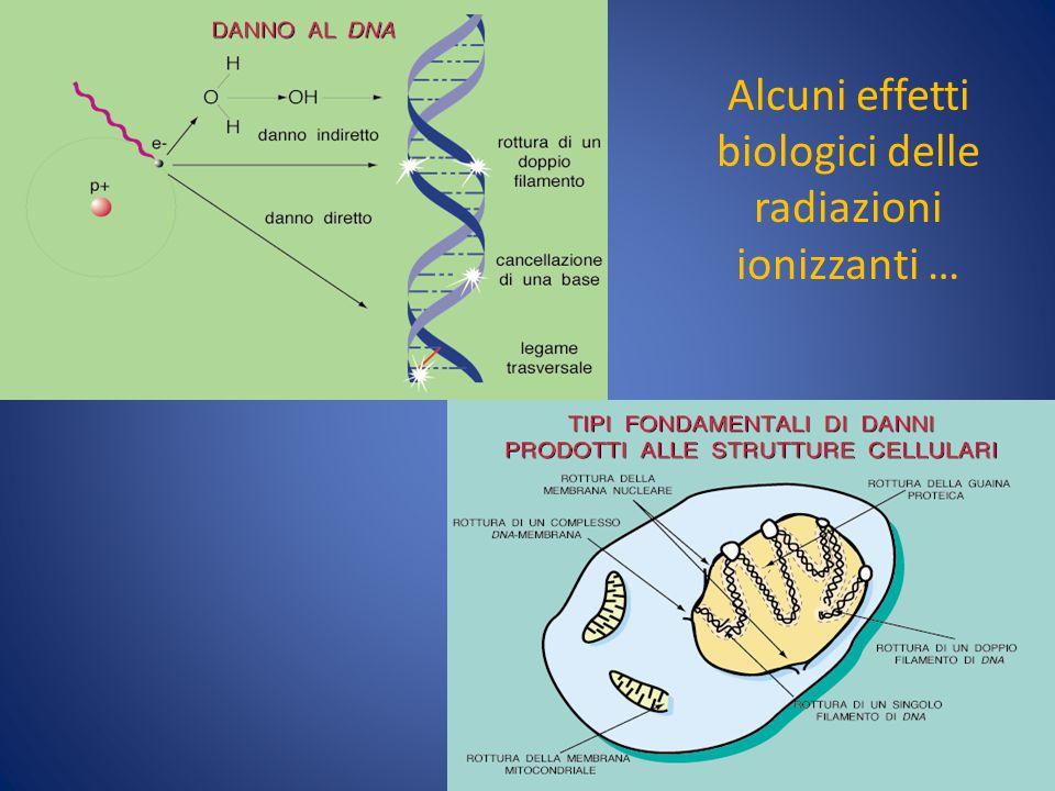 Alcuni effetti biologici delle radiazioni ionizzanti …