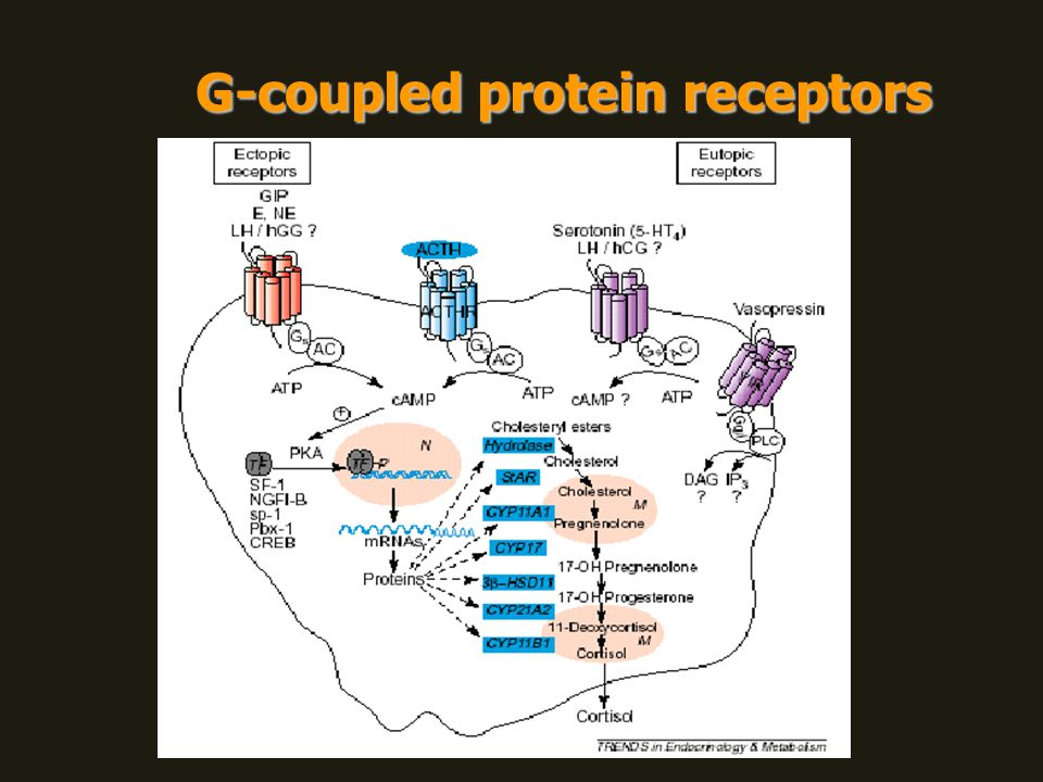 G-coupled protein receptors