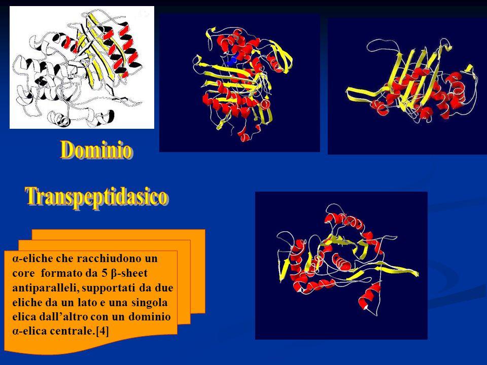 Dominio Transpeptidasico