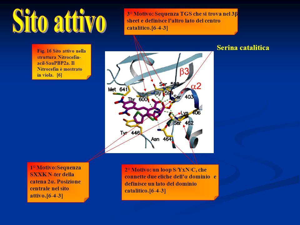 Sito attivo Serina catalitica