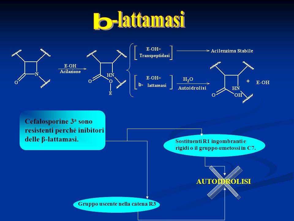 b -lattamasi. Cefalosporine 3a sono resistenti perché inibitori delle β-lattamasi. Sostituenti R1 ingombranti e rigidi o il gruppo αmetossi in C7.
