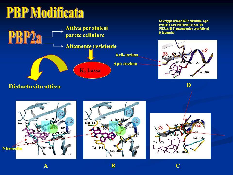 PBP Modificata PBP2a Distorto sito attivo