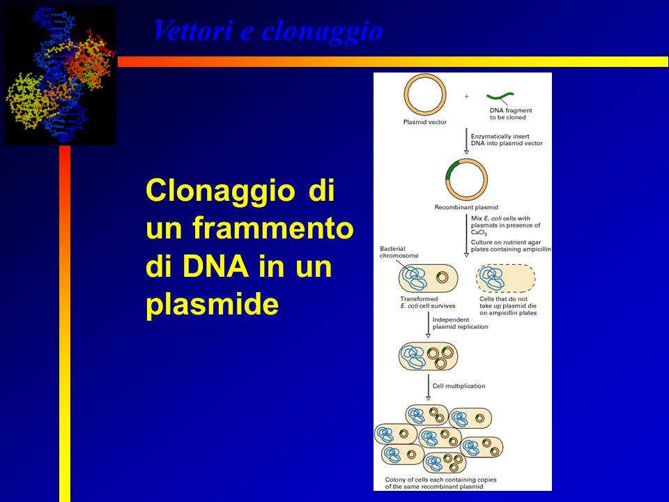 Vettori e clonaggio Clonaggio di un frammento di DNA in un plasmide