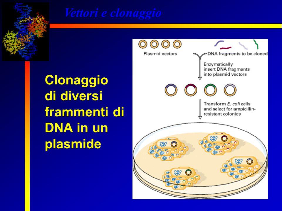 Clonaggio di diversi frammenti di DNA in un plasmide