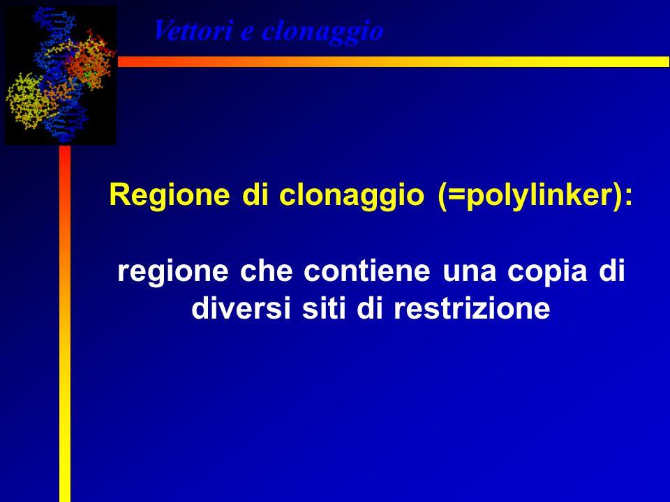 Regione di clonaggio (=polylinker): regione che contiene una copia di