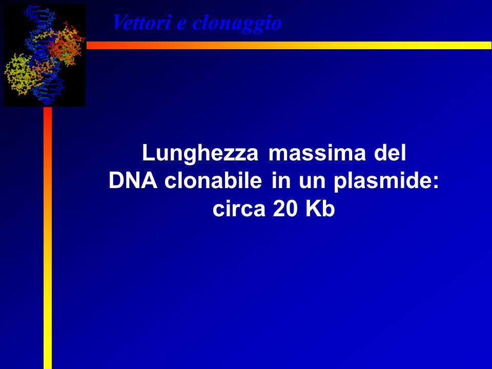 DNA clonabile in un plasmide:
