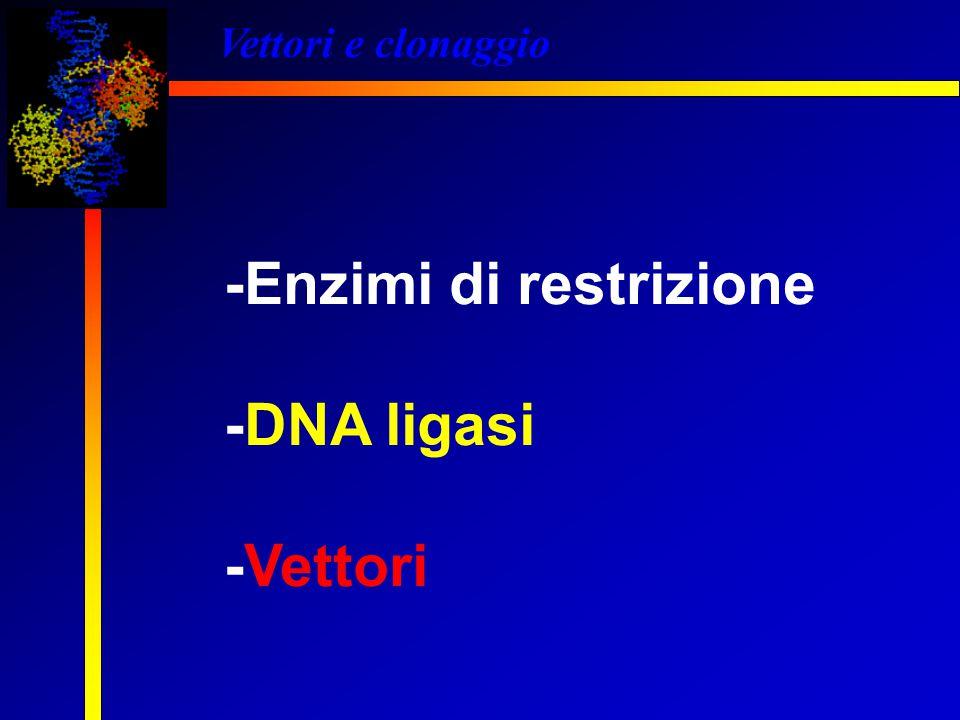 -Enzimi di restrizione -DNA ligasi -Vettori