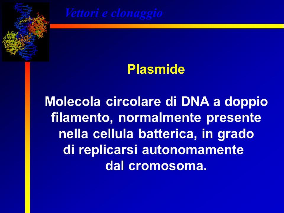 Molecola circolare di DNA a doppio filamento, normalmente presente