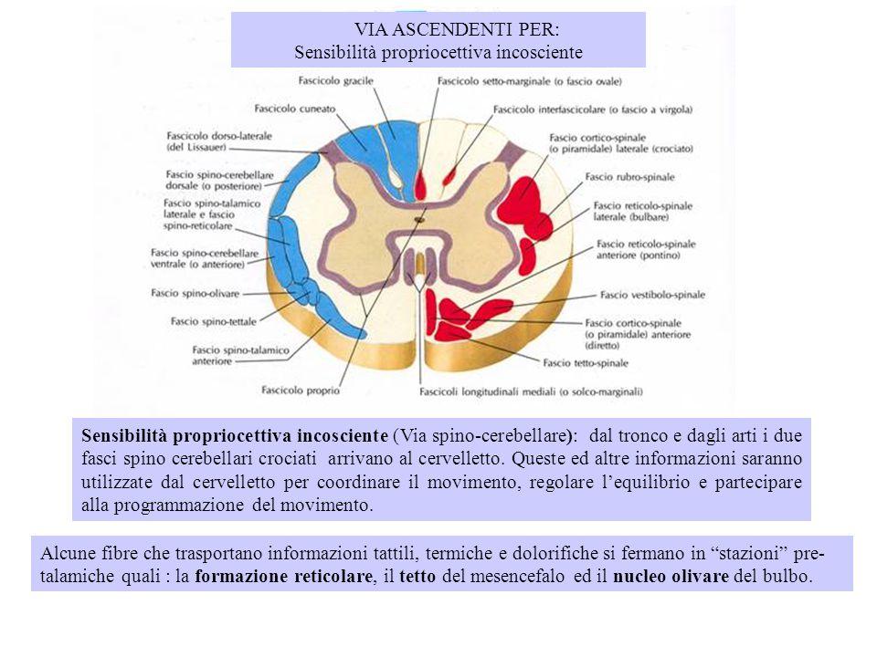 Sensibilità propriocettiva incosciente