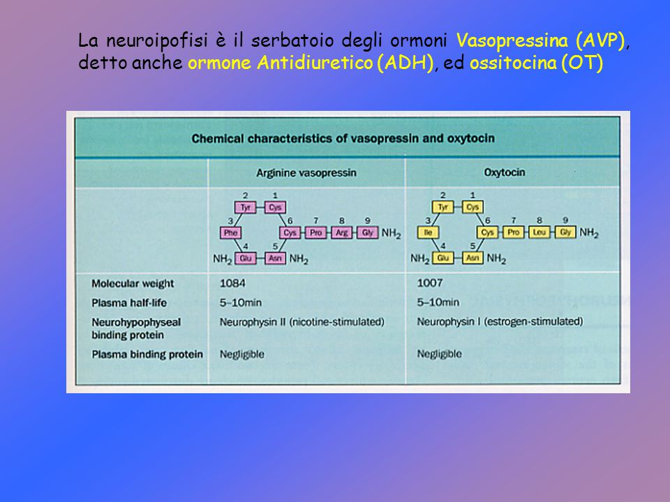 La neuroipofisi è il serbatoio degli ormoni Vasopressina (AVP), detto anche ormone Antidiuretico (ADH), ed ossitocina (OT)