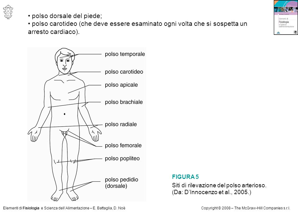 • polso dorsale del piede;