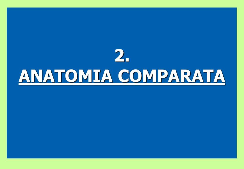 2. ANATOMIA COMPARATA