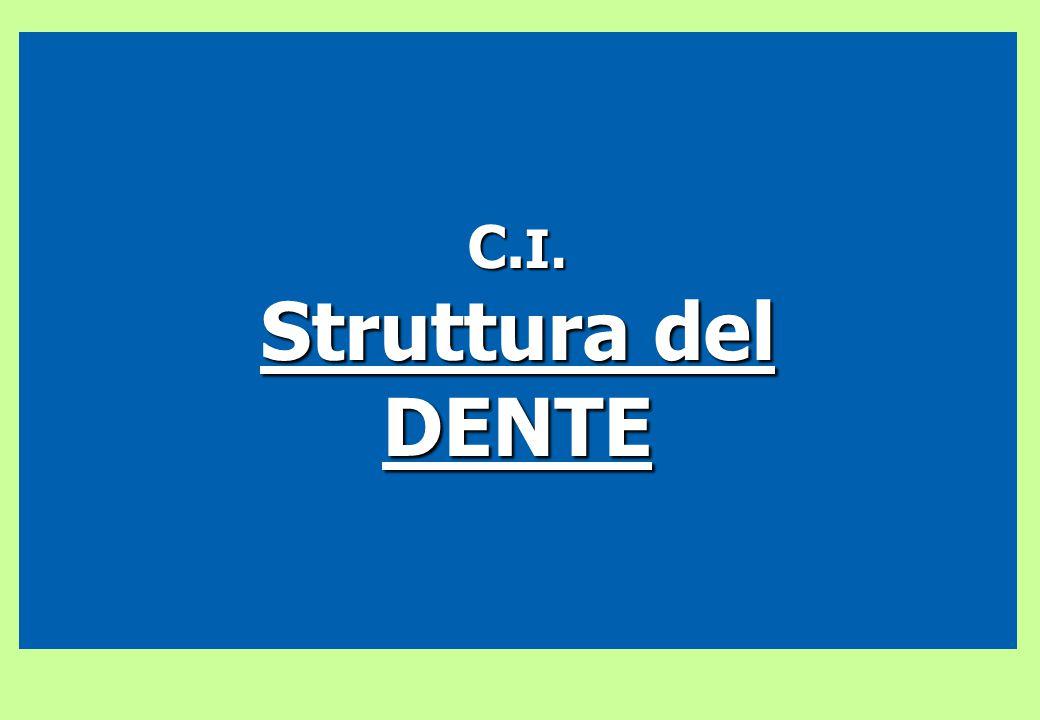 C.I. Struttura del DENTE