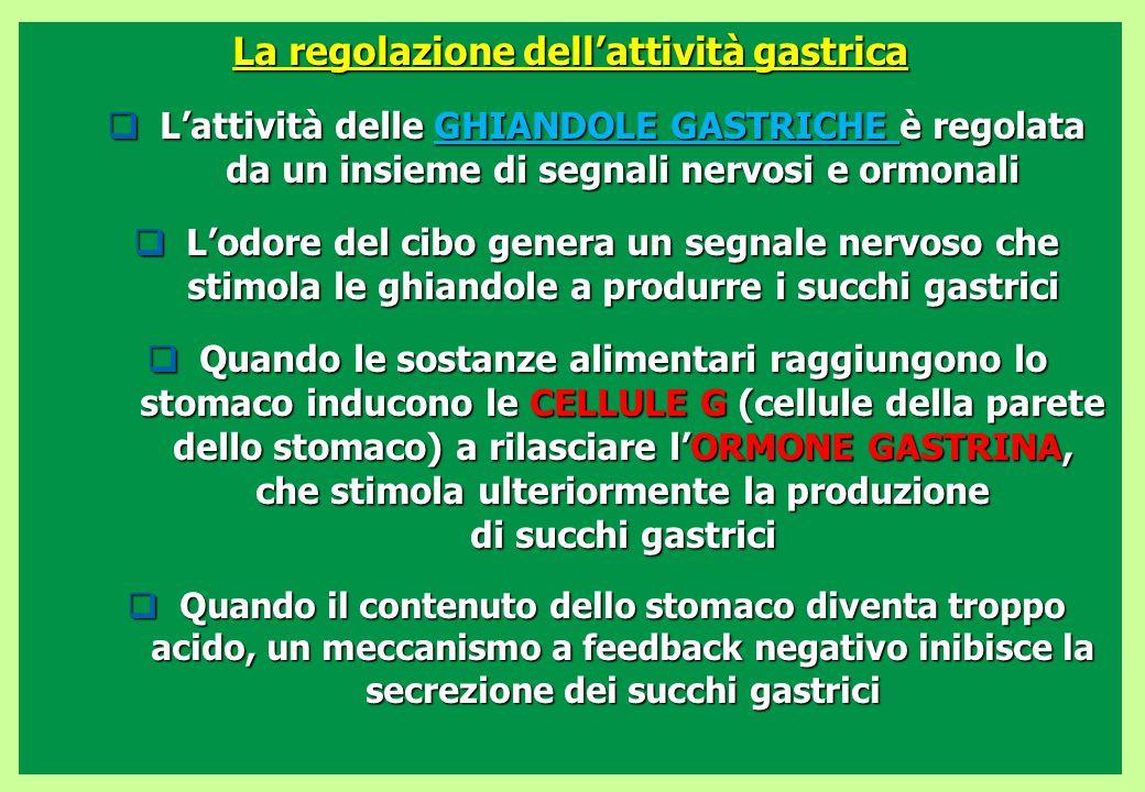 La regolazione dell'attività gastrica