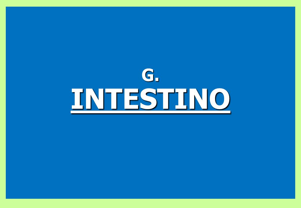 G. INTESTINO