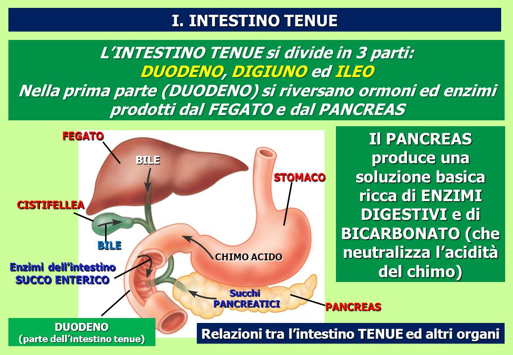 Enzimi dell'intestino (parte dell'intestino tenue)