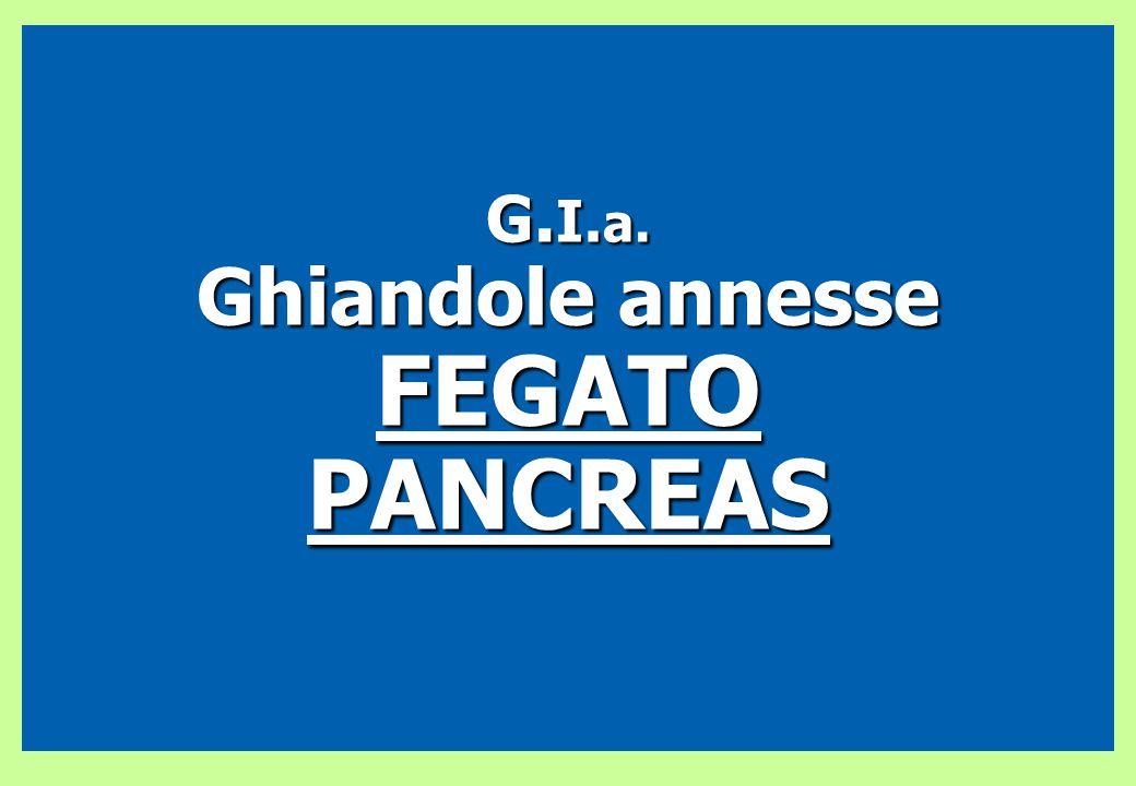 G.I.a. Ghiandole annesse FEGATO PANCREAS