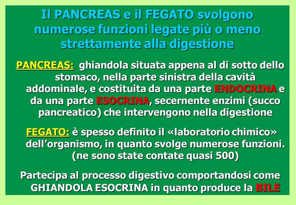 Il PANCREAS e il FEGATO svolgono numerose funzioni legate più o meno strettamente alla digestione
