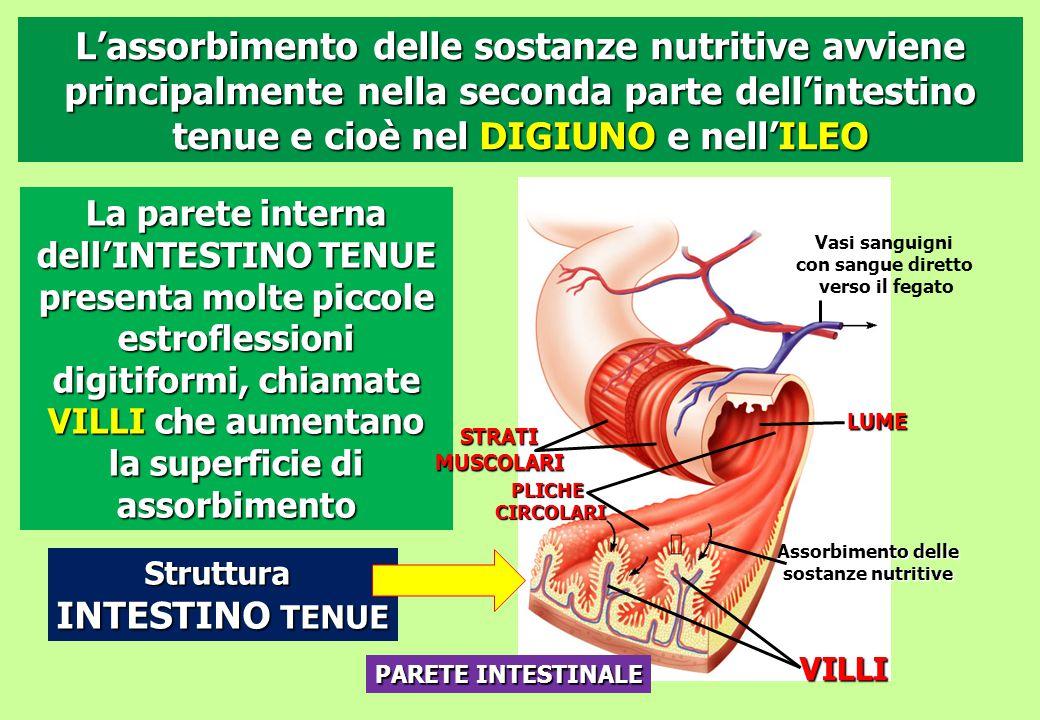 Assorbimento delle sostanze nutritive