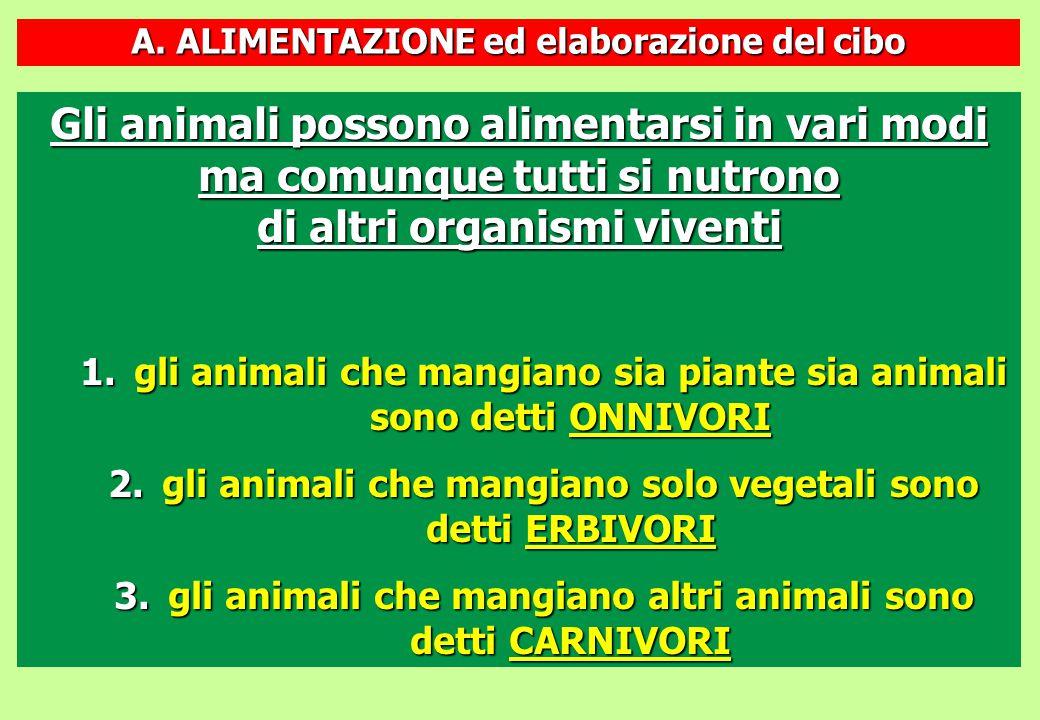 A. ALIMENTAZIONE ed elaborazione del cibo