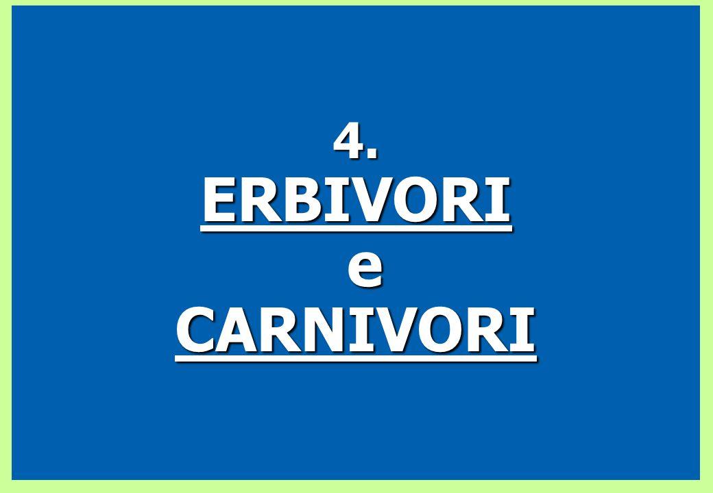4. ERBIVORI e CARNIVORI