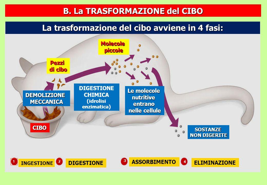B. La TRASFORMAZIONE del CIBO