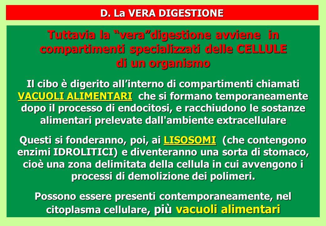 D. La VERA DIGESTIONE Tuttavia la vera digestione avviene in compartimenti specializzati delle CELLULE di un organismo.