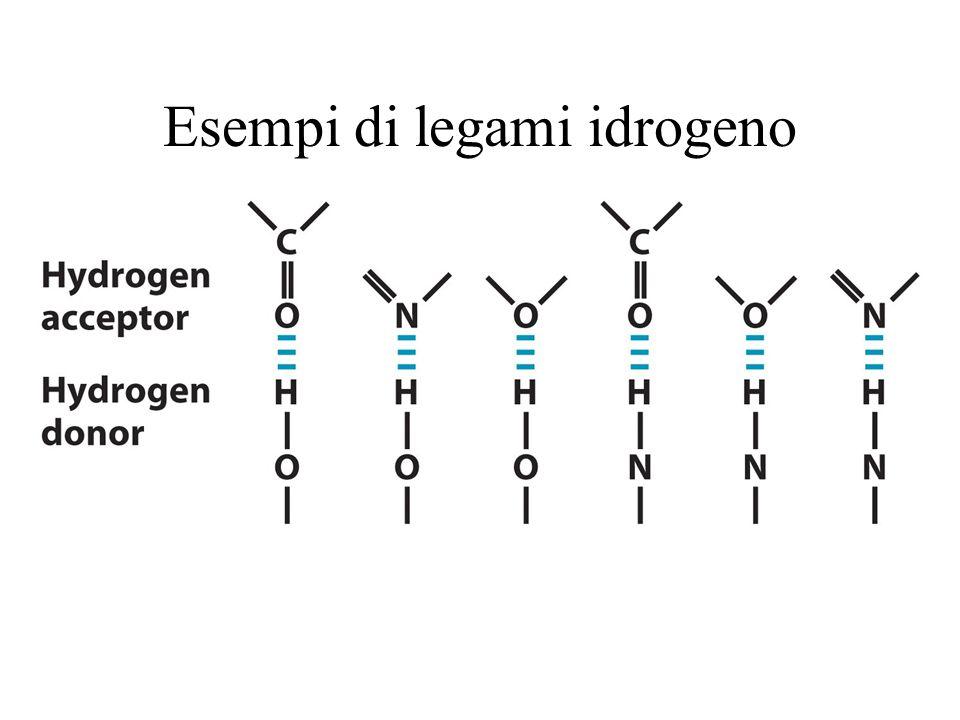 Esempi di legami idrogeno