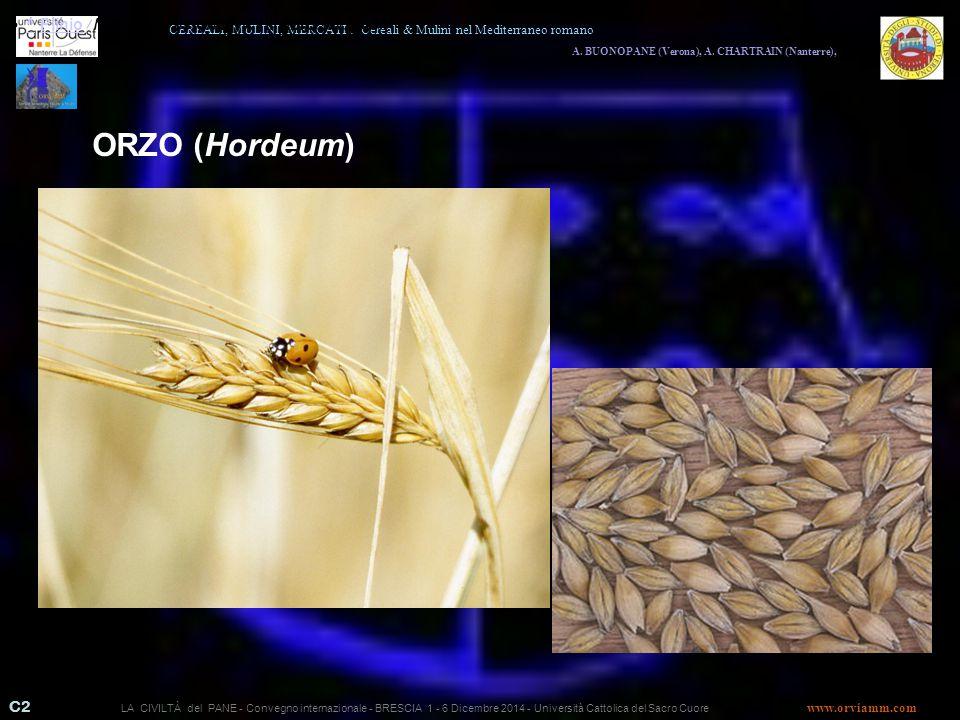 ORZO (Hordeum) · ^ Plinio, Naturalis Historiae, XVIII libro, vv.83-84