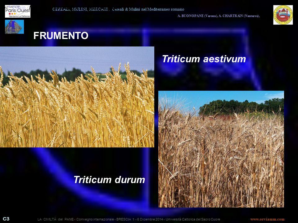 FRUMENTO Triticum aestivum Triticum durum