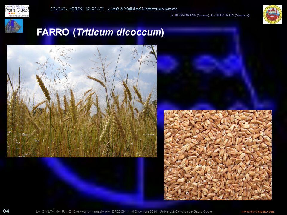 FARRO (Triticum dicoccum)
