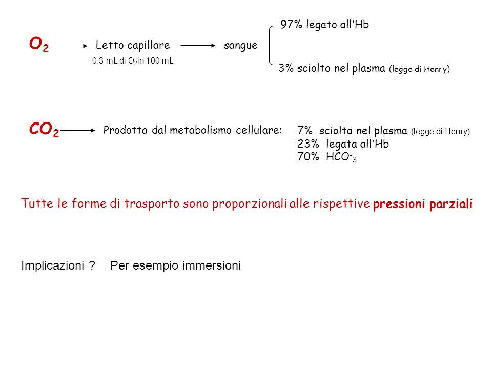 97% legato all'Hb O2. Letto capillare. sangue. 0,3 mL di O2in 100 mL. 3% sciolto nel plasma (legge di Henry)