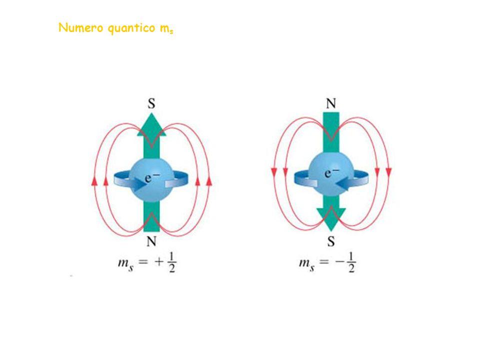 Numero quantico ms 7
