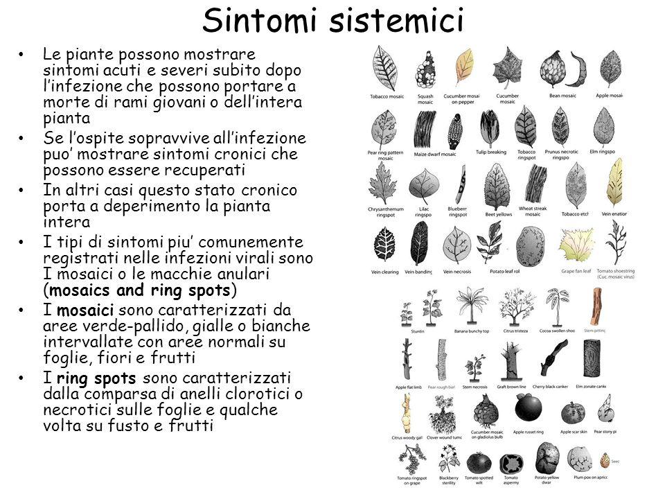 Sintomi sistemici